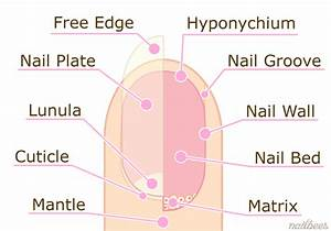 U00bb Would You Like To Know What Your Fingernails Say About