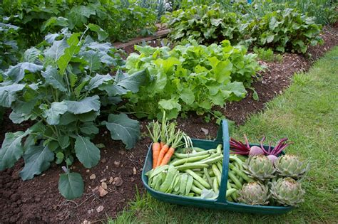top 5 reasons to start a vegetable garden welcome to
