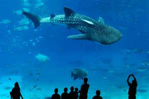 Biggest Whale Shark in the World