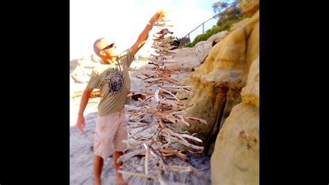 driftwood christmas tree youtube