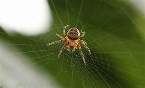 Se Débarrasser Des Araignées : comment se d barrasser des araign es de la maison sans les ~ Louise-bijoux.com Idées de Décoration