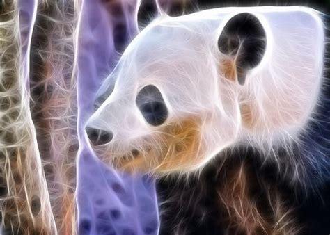 fractal zoo images  pinterest fractals