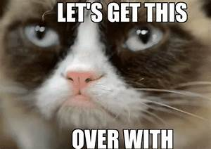 Grumpy Cat GIF - Find & Share on GIPHY