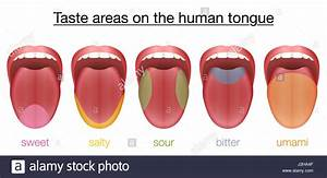 Taste Areas Of The Human Tongue