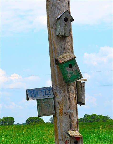old bird house on a telephone pole garden life pinterest