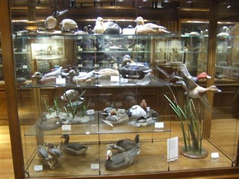 duck s unlimited museum picture of bass pro shops at the