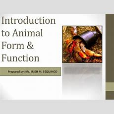 Introduction To Animal Form & Function