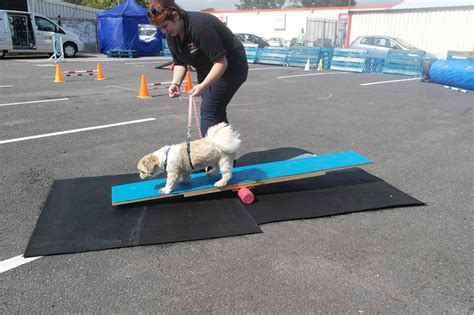 Dog Agility Chingford Enfield And Waltham Abbey
