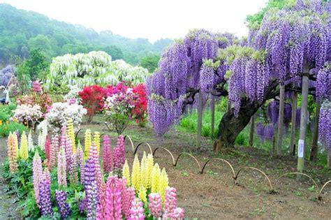 kawachi fuji garden in japan bronte kawachi fuji gardens kitakyushu japon