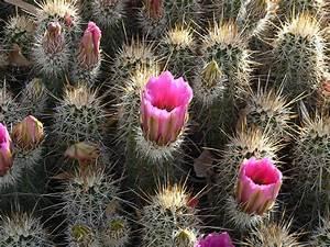 Desert Plants | Plant your own desert landscape | Desert ...