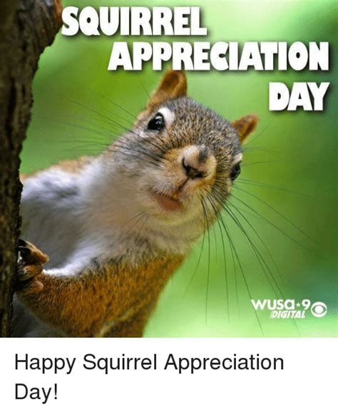 Squirrel Memes - 25 best memes about happy squirrels happy squirrels memes