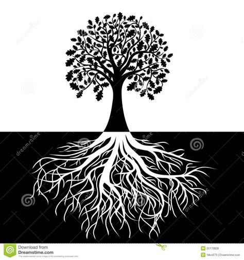 Schöner Hintergrund Schwarz Weiß by Baum Mit Wurzeln Auf Schwarzweiss Hintergrund Vektor