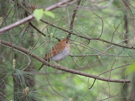 My Bird Of The Day Ontario Birds Ontario Birding And My