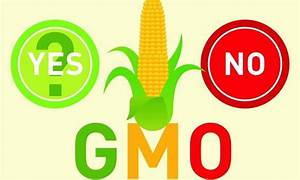 Are Gmos Genetic Monsters