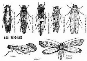 Larve Mite Alimentaire : insectes48 ~ Nature-et-papiers.com Idées de Décoration