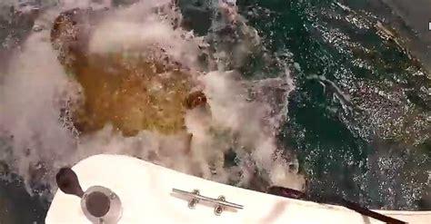 grouper aggressive feeding must goliath fishing