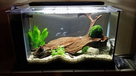 fluval spec aquascape my fluval spec v 2 days after purchase from aquarium