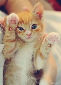 Tabby Baby | All things cute and fluffy | Pinterest