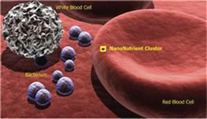 Nano Pet Health Announces First Wet Nano