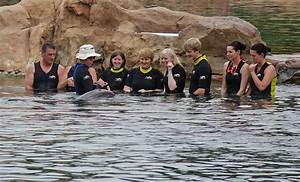 The Frog Family U0026 39 S Guide To Discovery Cove Orlando  With