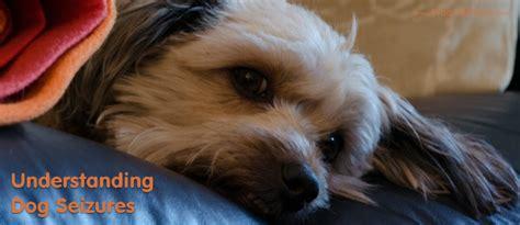 Understanding Dog Seizures