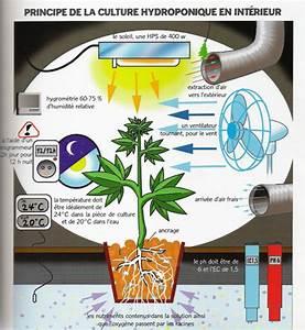 Culture Cannabis En Exterieur revsv de