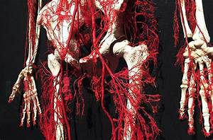 New Body Worlds RX Exhibit Coming to Houston