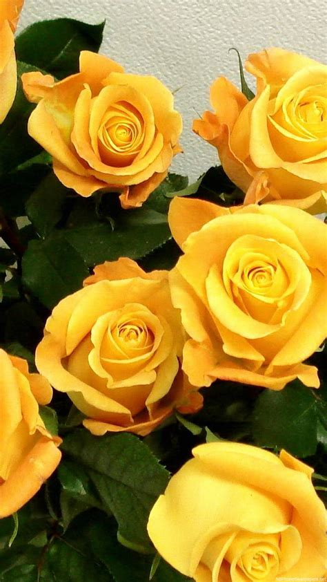 Choose from hundreds of free flower wallpapers. Beautiful Yellow Flowers Wallpapers Phone > Yodobi