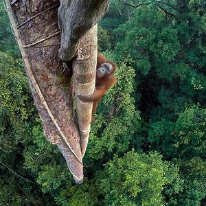 10 Images From Wildlife Photographer Of The Year Portfolio 26