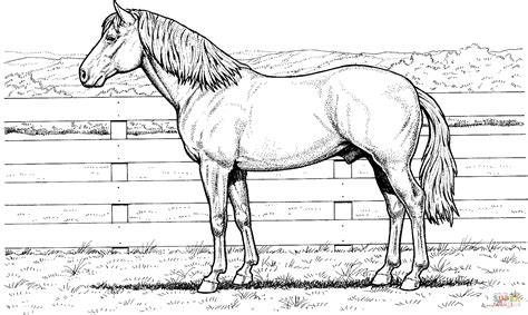 horse stands  fence coloring page  printable