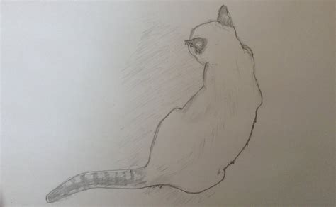 White Cat, Top View By Cassbackward On Deviantart