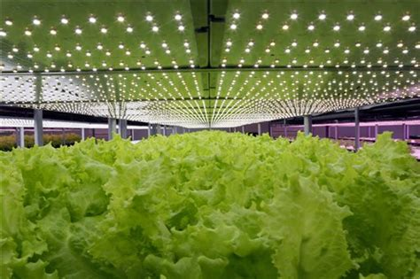growing vegetables indoors with led lights chinese the first led plant factory put into operation
