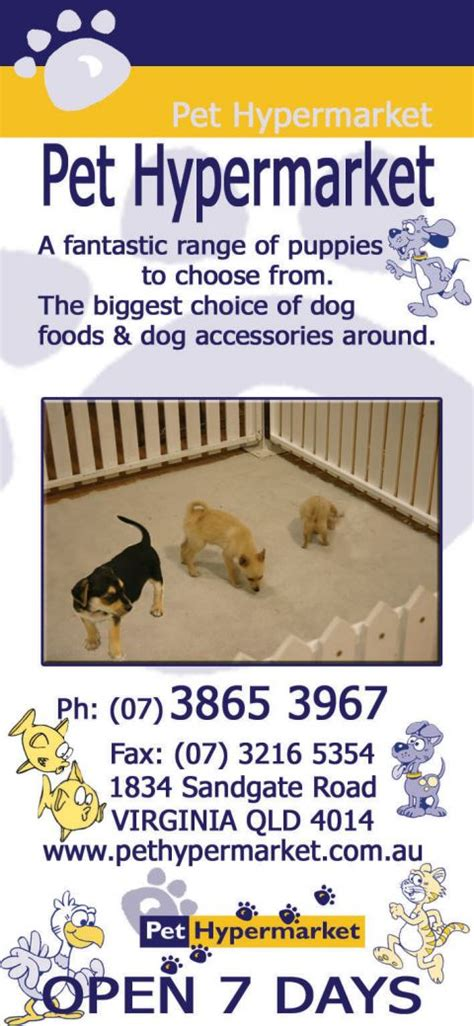 pet hypermarket pet shops stores  pets supplies