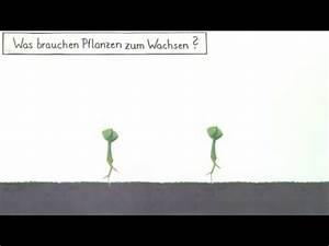 Was Brauchen Pflanzen Zum Wachsen : was brauchen pflanzen zum wachsen biologie kologie youtube ~ Frokenaadalensverden.com Haus und Dekorationen