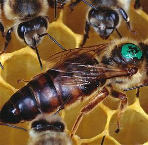 Krebsforschung  Das Schicksal Der Bienen Liegt In Den