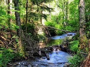 Bilder Vom Wald : die sonne spiegelt sich im bach 2010 05 16 10 15 08 ~ Yasmunasinghe.com Haus und Dekorationen