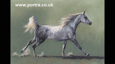 speed painting grey arabian horse  pastel youtube