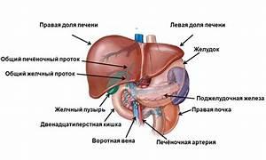 Какие препараты для лечение печени