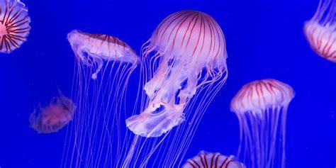 Miles de medusas nadan en la costa de Filipinas 🐙🇵🇭 ...