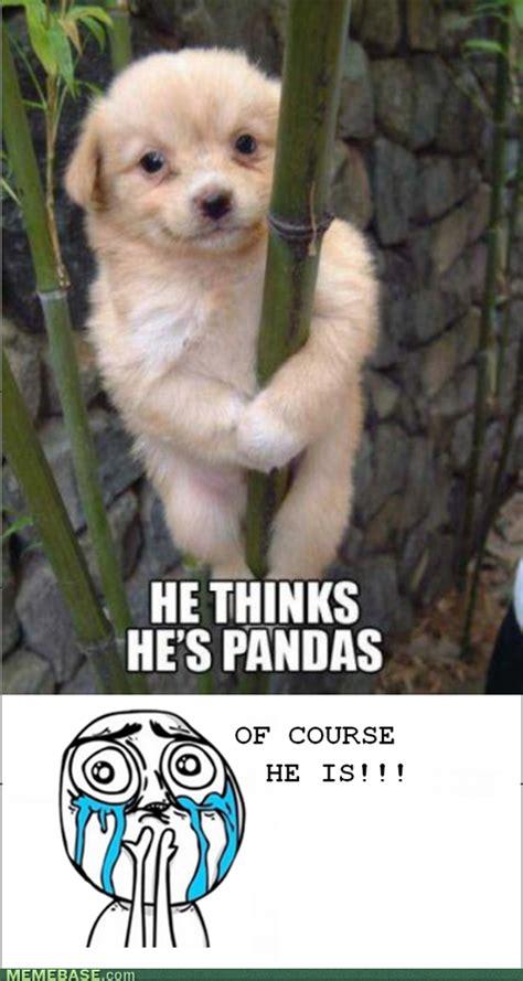 Cuteness Overload Meme - image 262459 cuteness overload know your meme