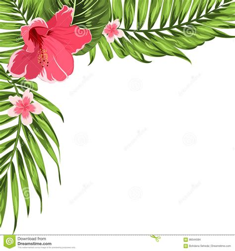 tropical wild templat orangery cartoons illustrations vector stock images