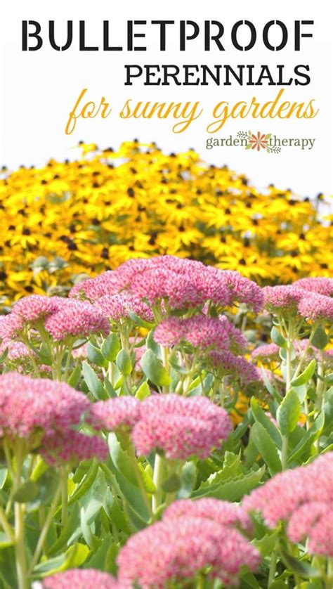 what are hardy perennial plants these hardy perennials for sun are the toughest on the block garden therapy
