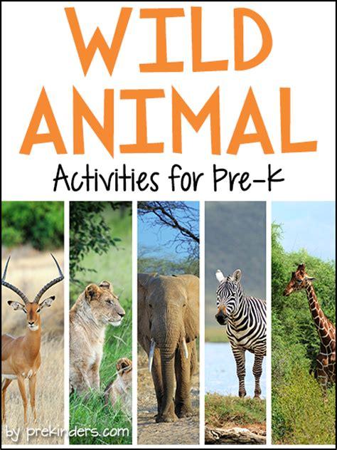 safari theme prekinders