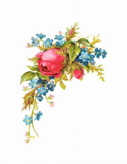 Royalty Roses Rose Clip Pretty Things Romantic