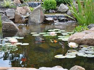 Ponds  U0026 Water Garden Pictures