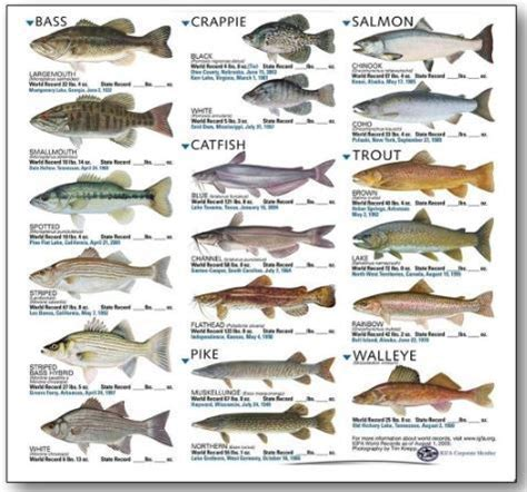types  fishes   pakistan forestrypedia