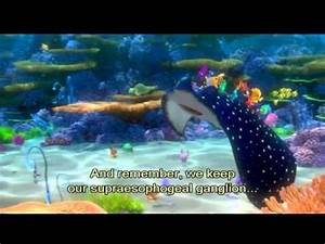 Finding Nemo Mr Ray YouTube