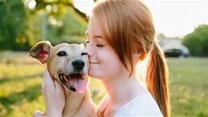 Gothaer Kfz Versicherung Berechnen : hundehaftpflicht online abschlie en gothaer ~ Themetempest.com Abrechnung