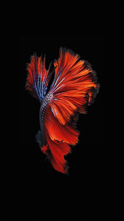 original wallpaper iphone 7 papers co an81 apple ios9 fish live background 33