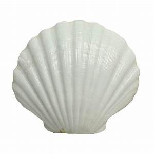 Find the U S Shell Irish Deep Shell at Michaels